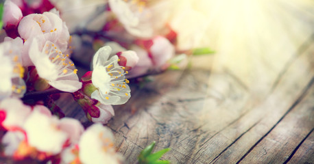 Klistermärke - Spring blossom on wooden background. Blooming apricot flowers