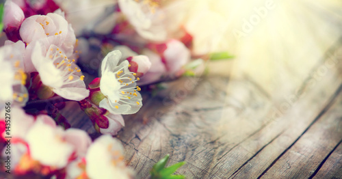 Wall mural Spring blossom on wooden background. Blooming apricot flowers