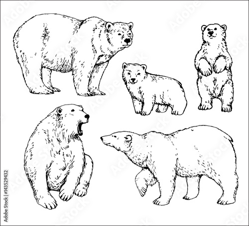 Set Of Isolated Hand Drawn Polar Bear Contours Stock Image