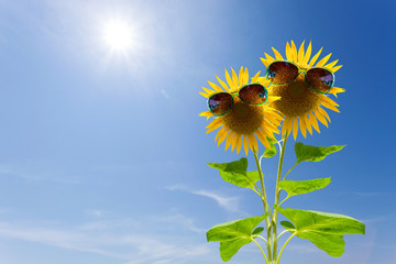 Sunflower with green sunglasses on sky background.