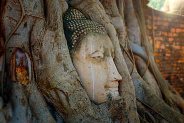 Famous Image Buddha Head with Banyan Tree Root at Wat Mahathat Temple in Ayuthaya Historical Park, a UNESCO world heritage site, Thailand