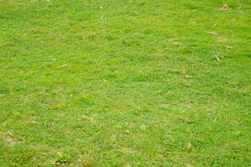 A close-up of the green lawn