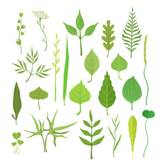 Fresh green leaves from trees, shrubs and grass set for label design. Nature and ecology, cartoon detailed colorful illustration