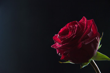 Beautiful red rose in a glass with water on a black background