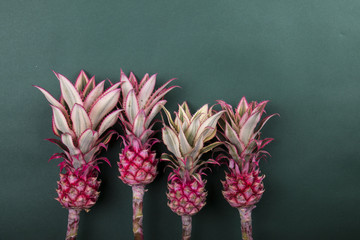 Four colorful  pink pineapple on green background . Family concept