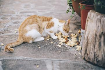Sad little ginger homeless cat