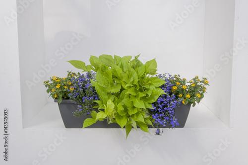 Balkonkasten Balkonblumen Stockfotos Und Lizenzfreie Bilder Auf