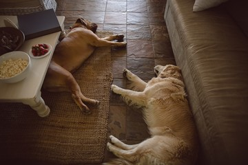 Dogs relaxing in living room