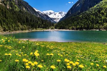 Wall Mural - Beautiful mountain landscape with lake and meadow flowers in foreground. Stillup lake, Austria, Tyrol
