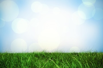 Composite image of grass