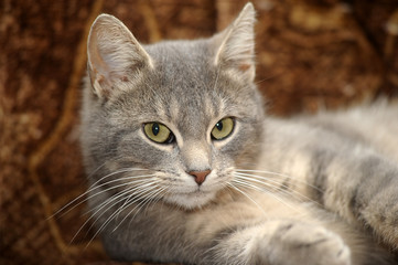 Cute gray striped cat