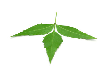 Herbal Medicinal Neem leaves