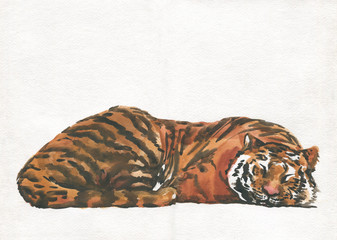 tiger sleeps, watercolor painting