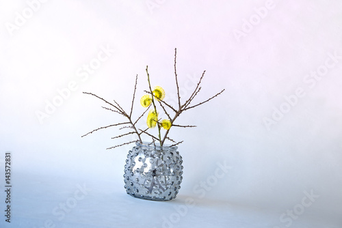 Pussy Willow Branch In Vase Stock Photo And Royalty Free Images On