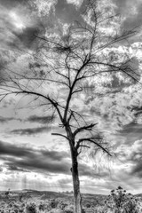 Dry branch of tree over the sky. Black and white