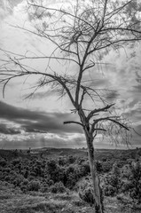 Dry branch of tree over sky. Black and white
