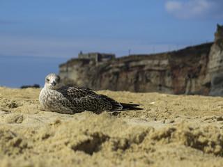 Vogel im Sand