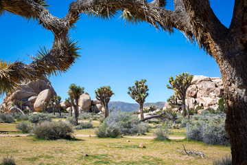 Fotobehang Natuur Park Joshua Tree National Park in California