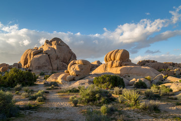 Foto op Canvas Natuur Park Joshua Tree National Park in California