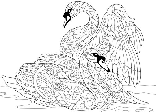 Stylized couple of swans swimming in the pond or lake water. Freehand sketch for adult anti stress coloring book page with doodle and zentangle elements.
