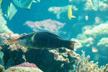 Spoed Foto op Canvas Koraalriffen ein Korallenriff