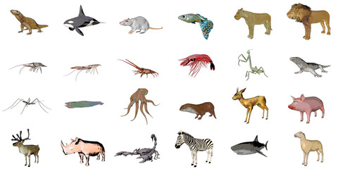 Big collection of sketch animals isolated on white 3d rendering