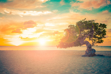 Aruba beach sunset with Divi Divi Tree