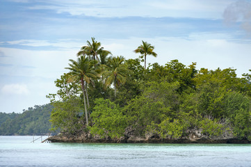 Tropical island in the Raja Ampat area of Indonesia. A small, uninhabited island is a typical sight in the Raja Ampat area. Palm trees and beautiful clear water.
