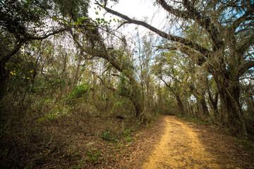 Florida Path
