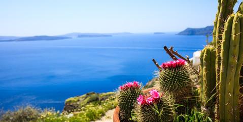 Santorini island, Greece - Blooming cactus on sea background