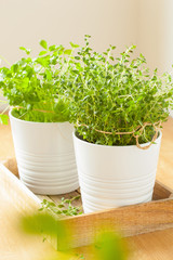 fresh thyme and parsley herbs in white pots