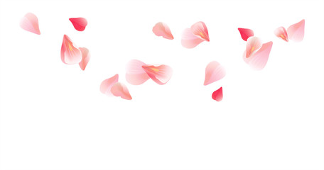 Pink Red flying petals isolated on white background. Sakura Roses petals. Vector