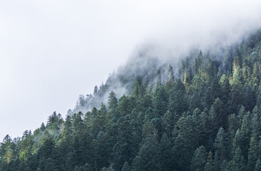 foggy over  forrest in the evening.