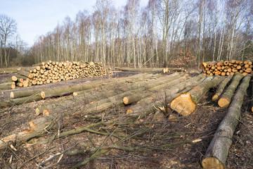 Wycinka drzew w okolicy Zgierza pod budowę S14