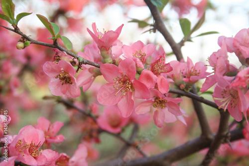 Sfondo Di Primavera Fiori Rosa Su Ramo Stock Photo And Royalty