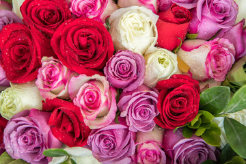 rose background ,natural texture