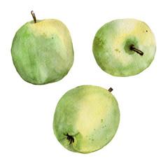 watercolor green apple granny smith