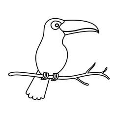 toucan exotic bird icon