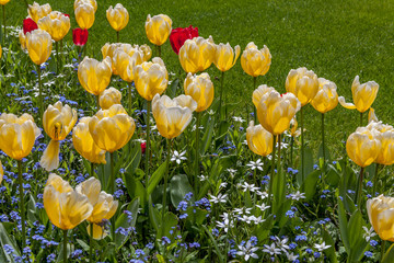 yellow and red flowers in a sunshine and green grass