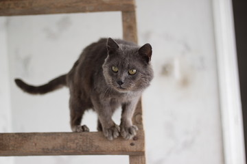серый кот, на деревяной лестнице