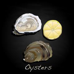 Fresh oyster image set