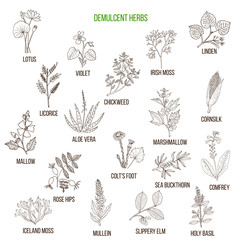 Demulcent herbs. Hand drawn set