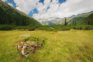 Meadows in the National Park of Adamello Brenta from the Val di Fumo. Trentino Alto Adige, Italy