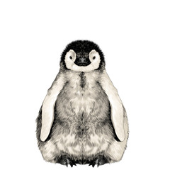 baby penguin small and cute is in full growth is symmetrical, the sketch vector graphics color picture