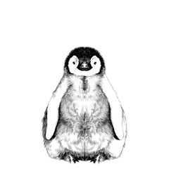 baby penguin small and cute is in full growth is symmetrical, the sketch vector graphics black and white drawing