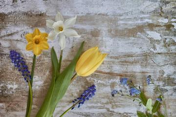 Spring Flora