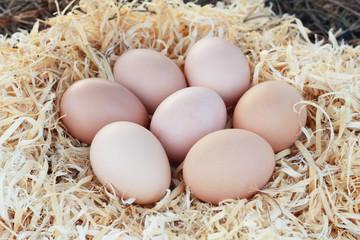 Chicken eggs in nest of straw.