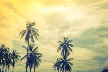 Coconut tree over blue sky .  ( Filtered image processed vintage effect. )