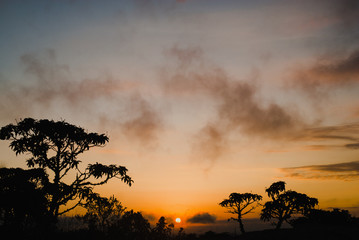 Trees silhouettes at sunrise in Brazil