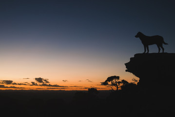 Dog and stone silhouettes at dawn in Brazil